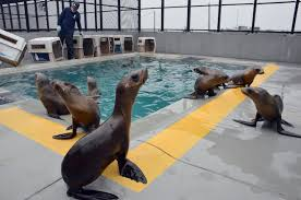 MMC_sea_lion_pups