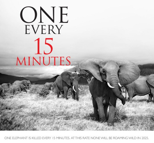 International March for Elephants poster