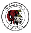 David Sheldrick Wildlife Trust logo