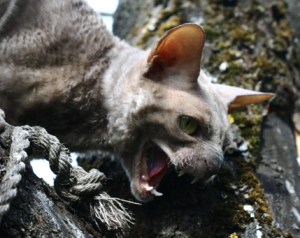 Hissing cat in a tree