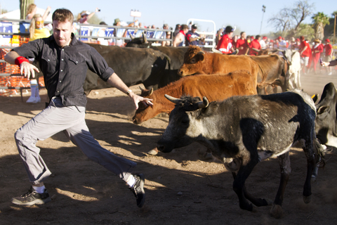 Running of the bulls in Arizona