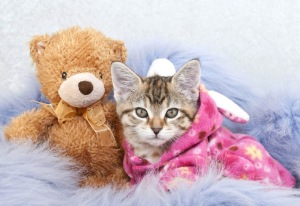 Cat in pajamas snuggling a teddy bear