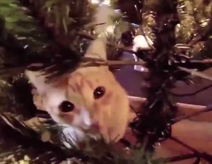 Orange cat in Christmas tree