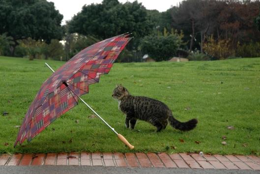 cat-in-rain