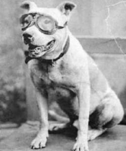 Bud the dog, with goggles